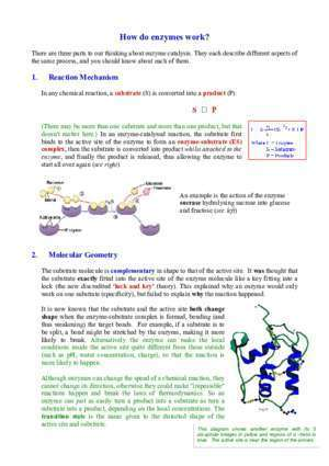 Apoenzyme : CHAPTER 4 BiologyMad