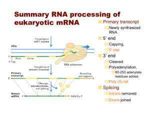 RNA Processing - SIU School of Medicine
