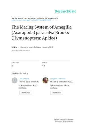 Amegilla : The Mating System of Amegilla Asarapoda paracalva Brooks