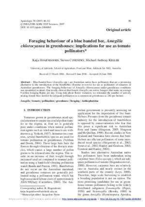 Amegilla : Foraging behaviour of a blue banded bee, Amegilla