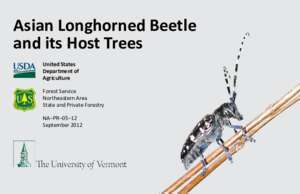 Asian Longhorned Beetle and its Host Trees