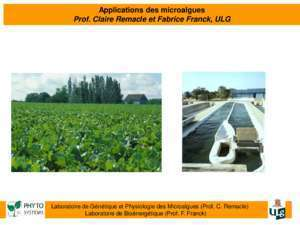 Bioplastic algae : Applications des microalgues GreenWin